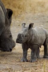 Africa - baby rhino 2