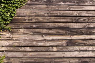Mur en bois et lierre