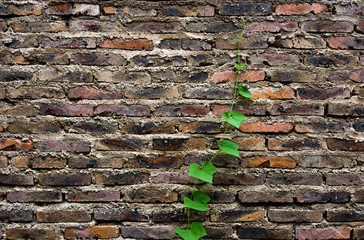 green life on brick