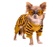 Chihuahua puppy wearing yellow suit and goggles