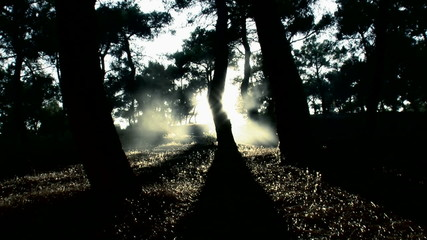 Tree shadow and fog