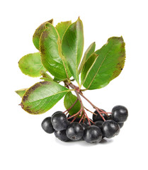 black ashberry