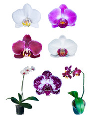 group of orchids isolated