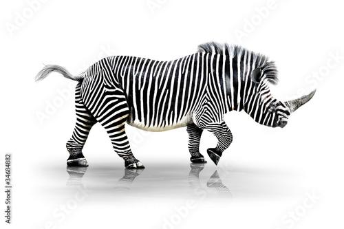 Tuinposter Neushoorn Zebra-Horn