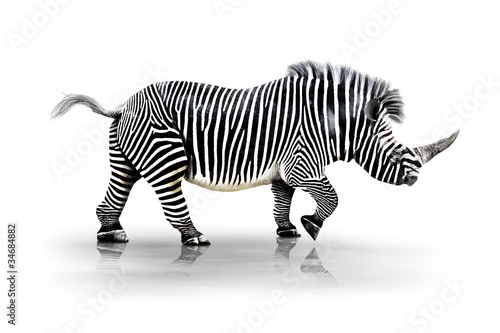 Poster Zebra-Horn