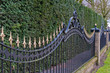 Black painted iron fence with golden spikes before a conifer hed - 34698018