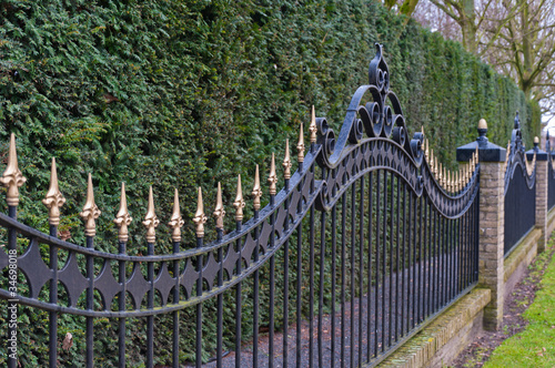 Black painted iron fence with golden spikes before a conifer hed
