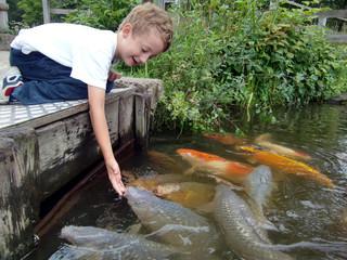 Junge beim Fische füttern