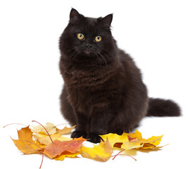 cat and autumn isolated