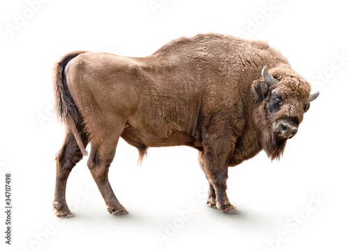 In de dag Bison european bison isolated on white background
