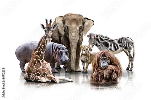 Staande foto Leeuw Gruppen Tierportrait
