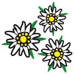 Alpenblumen  / Edelweiß / Edelweiss