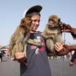 Dresseur de singes à Marrakech