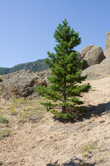 A small pine on a mountainside