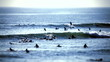 surfer group 02 - tilt/shift lens