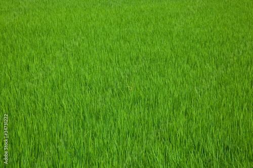 farm[paddy_field]_09