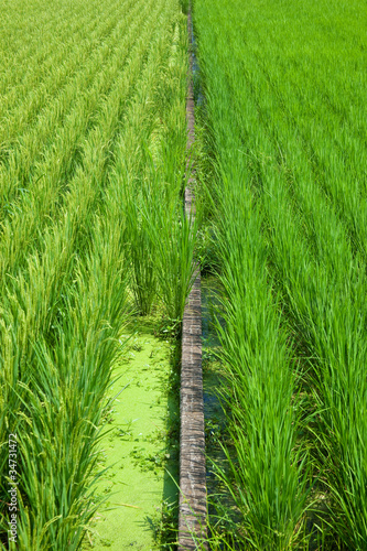 farm[paddy_field]_29