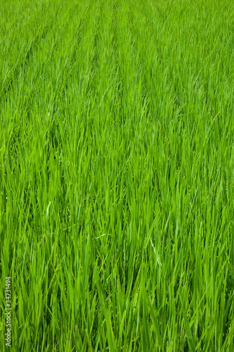 farm[paddy_field]_34