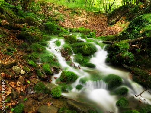 Fototapeten,wald,wasser,natur,fluß