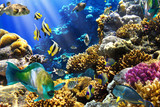 Coral colony and coral fish - Fine Art prints
