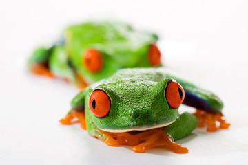 Follow the Leader with frogs