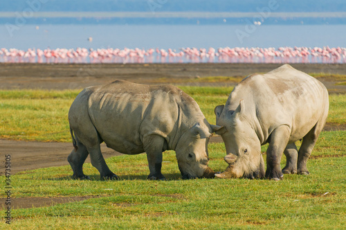 Fotobehang Flamingo rhinos in lake nakuru national park, kenya