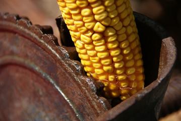 Máquina para desgranar mazorcas de maiz