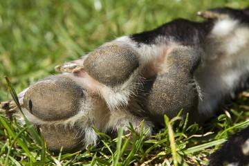 Greyhound Foot