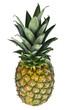 Ganze stehende Ananass