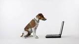 Dog Reading The Laptop