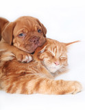 Cat and pup