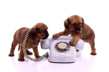 zwei Welpen mit Telefon