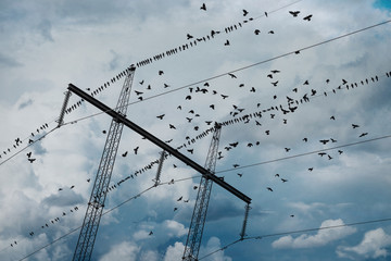 Electricity pylon with birds