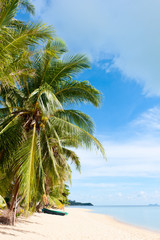 Tropical beach with coconut palm trees at Seychelles