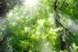Fototapeten,grün,wald,blatt,grün