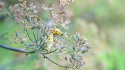 insetti su fiore