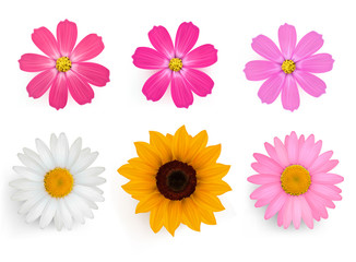 Big set of beautiful colorful flowers. Vector illustration.