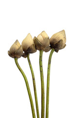 Dried lotus flowers.