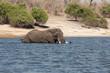 Elefante macho cruzando el Chobe