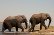 Dos elefantes saliendo del rìo