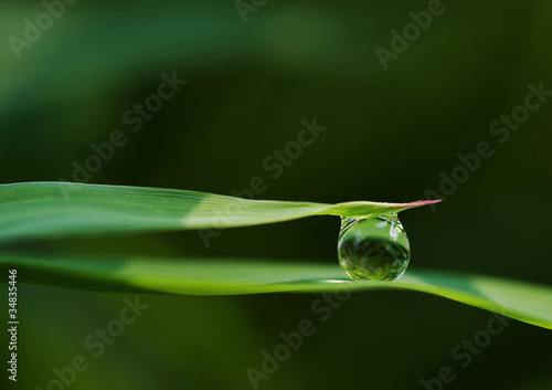 Morning Dewdrop