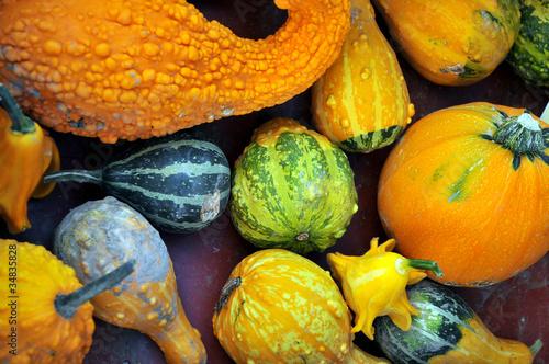 Poster Zucche decorative