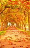 Fototapety Nice pathway at autumn