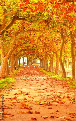 Naklejka Nice pathway at autumn