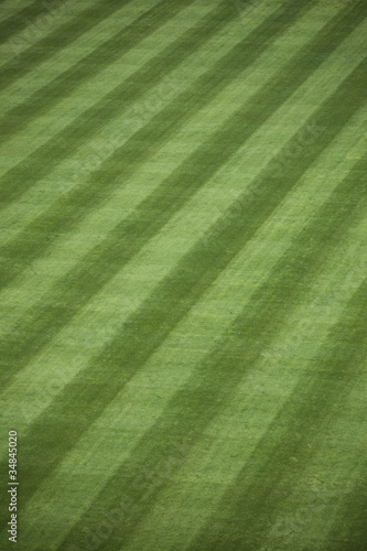 Fresh Outfield Grass