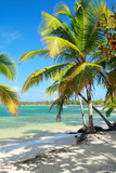 Tropical beach with beautiful palms