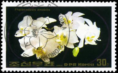 NORTH KOREA - CIRCA 1984 Phalaenopsis