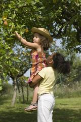 2 jeunes filles s'entraidant pour cueillir des pommes