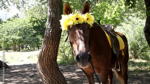 Romantic horse stands in park