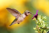 Fototapeta kwiat - latający - Ptak